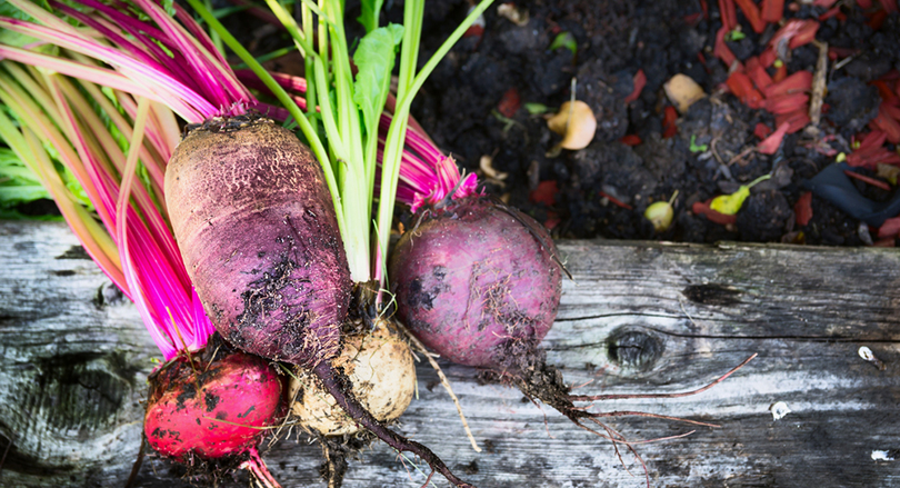地球も喜ぶ! 「無農薬のお米や野菜」の3つのメリットとは?