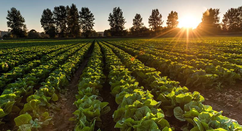 無農薬は環境を守る!
