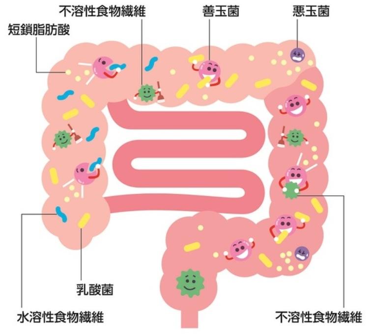 バランスのよい腸内環境を保つイラスト